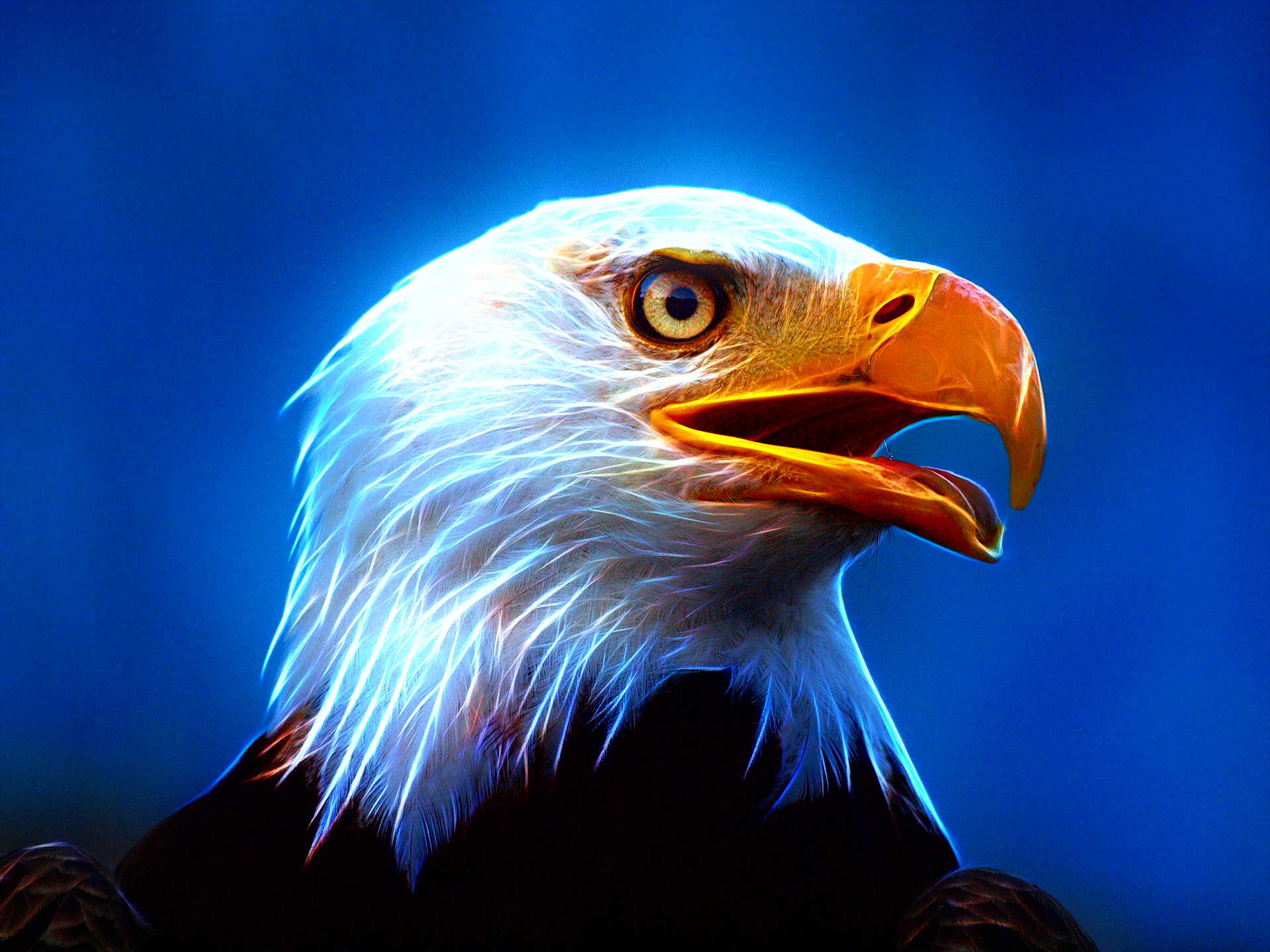 Ultra Hd Eagle Wallpaper