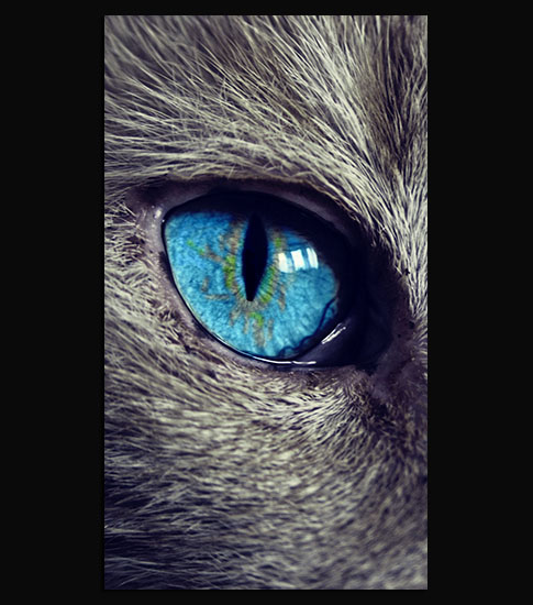 Cat Eye iPhone 6 Plus Wallpaper
