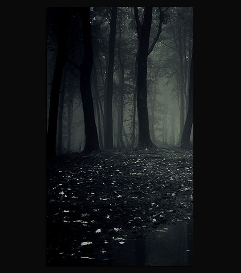 Dark Forest Background For Your LG Phone