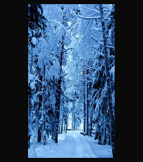Frozen Forest Background For Your Mobile Phone