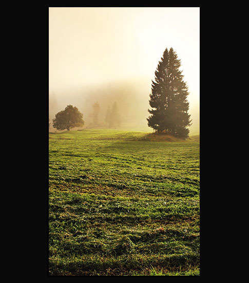 Misty Meadow Background For Your LG Phone