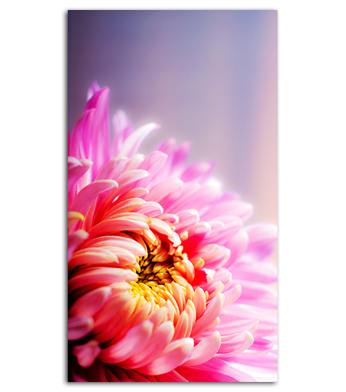 pink flower hd wallpaper for your mobile phone spliffmobile
