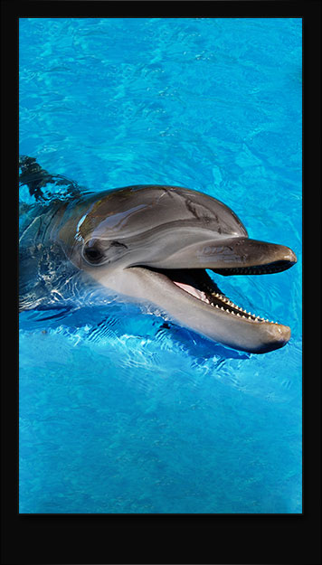 Happy Dolphin Samsung Galaxy Wallpaper