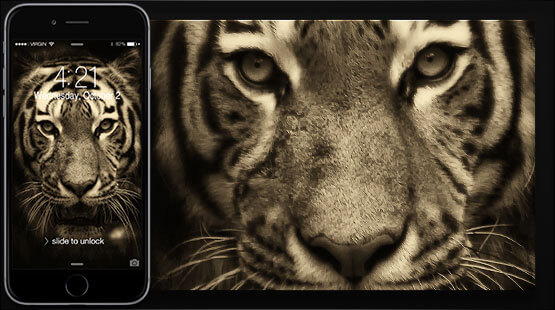 Tiger Samsung Galaxy Wallpaper