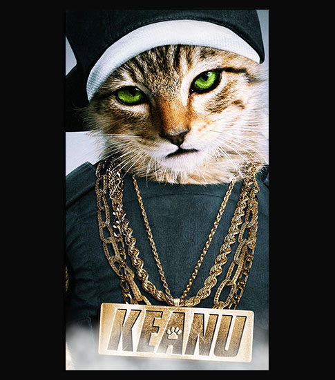 Keanu Cat Free Hd Phone Wallpapers