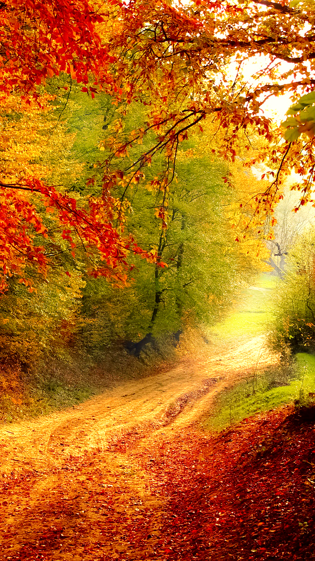 autumn bend hd wallpaper for your mobile phone