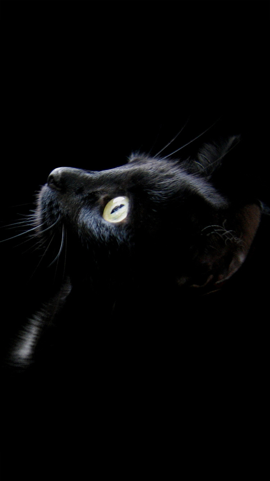 Good Cat Wallpaper For Your Phone - black-cat-4489  Pictures_211100 .jpg