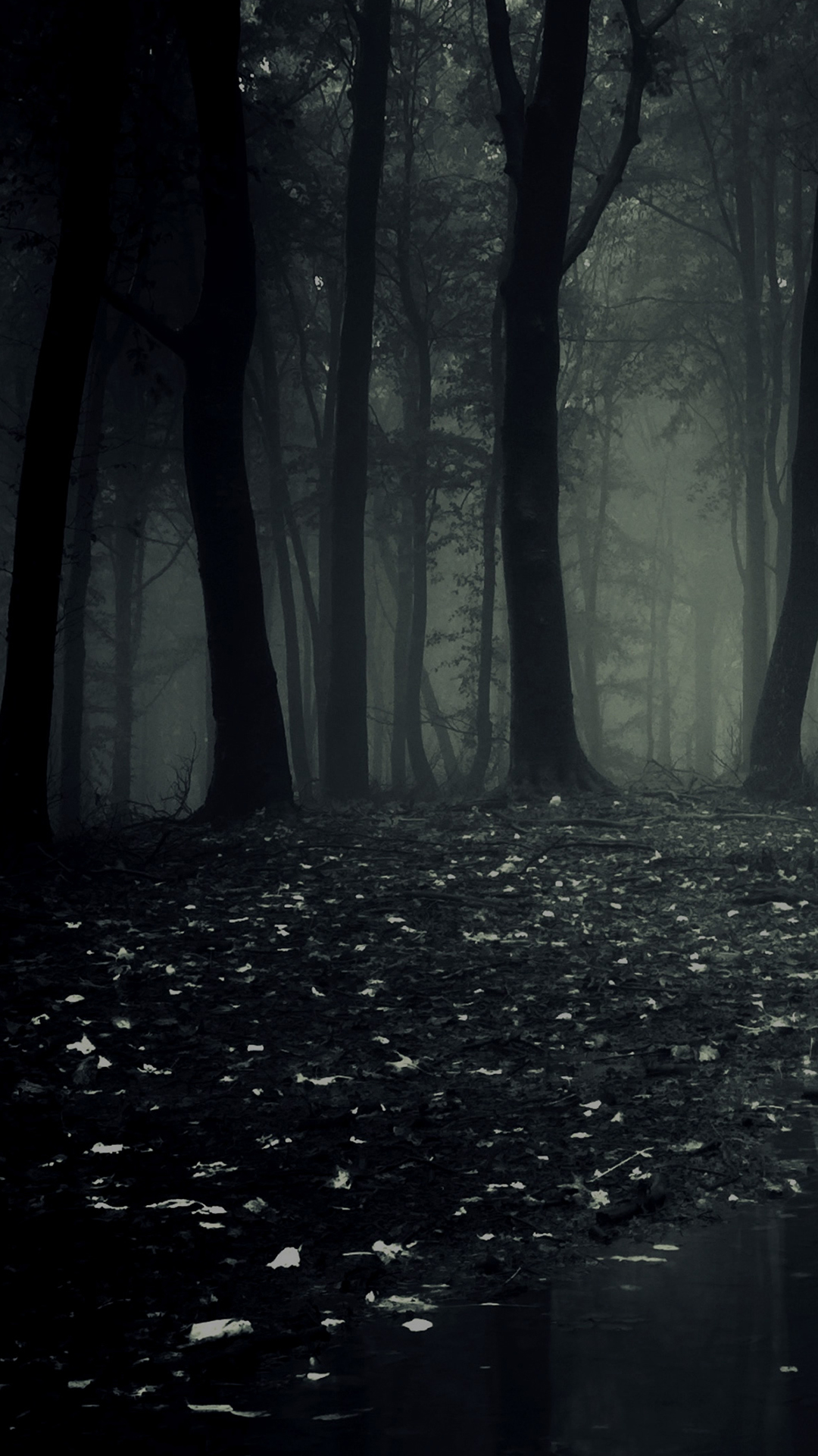 dark forest hd android wallpaper