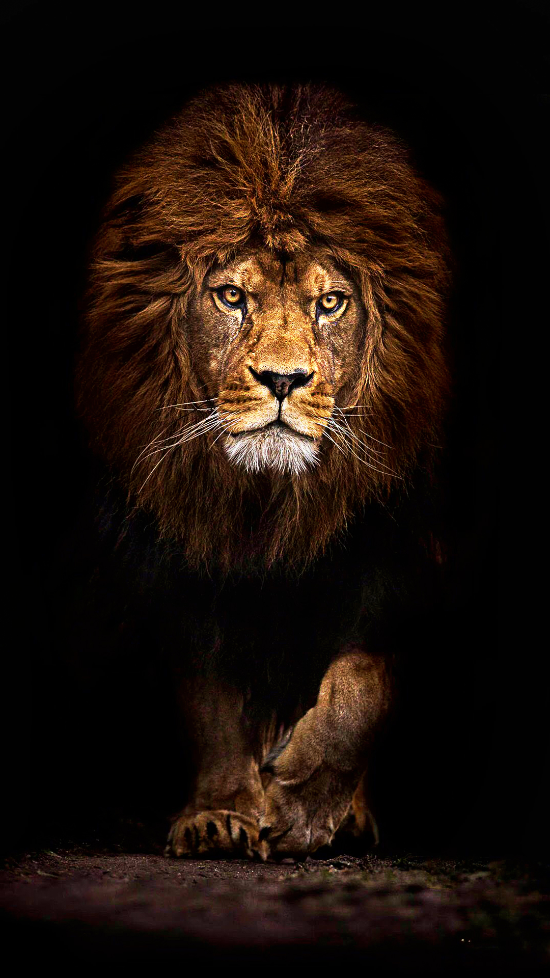 mufasa lion 1080 x 1920 hd wallpaper