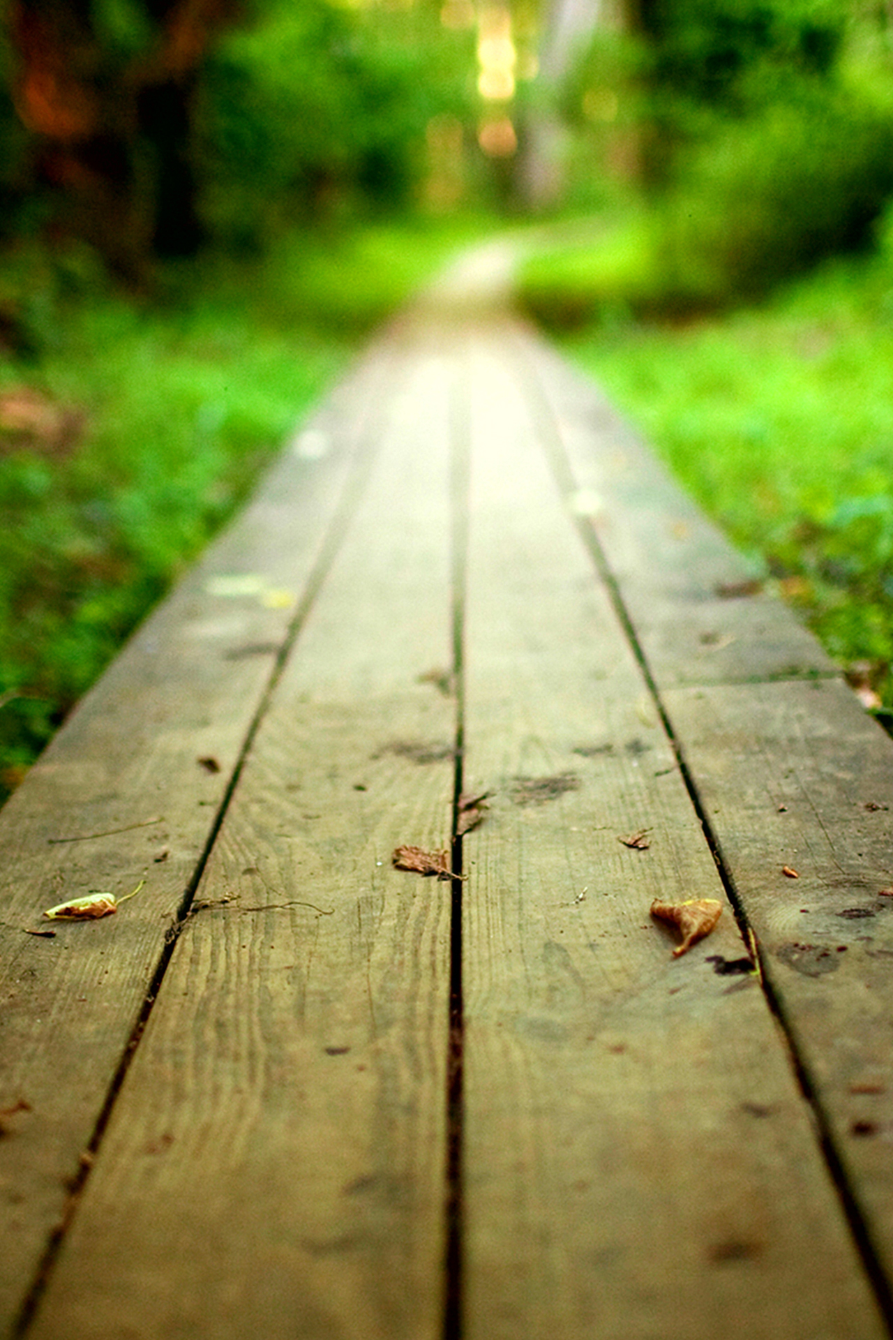 Wooden Pathway Wallpaper Style2