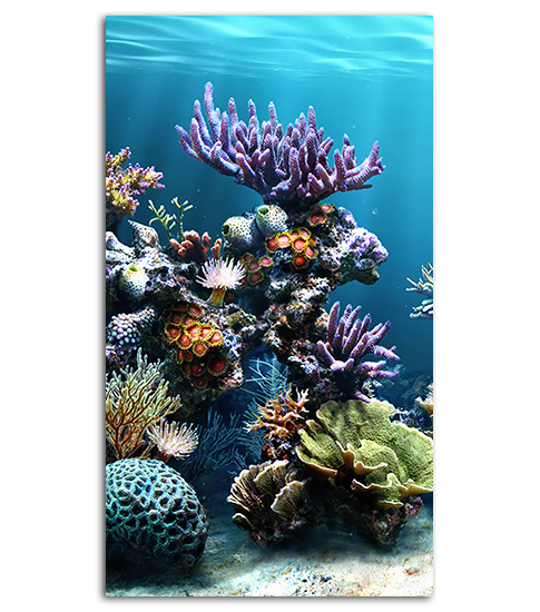 Coral Reef HD Wallpaper For Your Mobile Phone | SPLIFFMOBILE