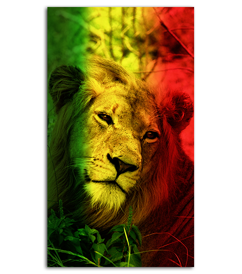 Lion Heart HD Wallpaper For Your Mobile Phone