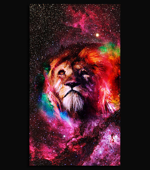 Space lion hd wallpaper for your mobile phone - Lion 4k wallpaper for mobile ...