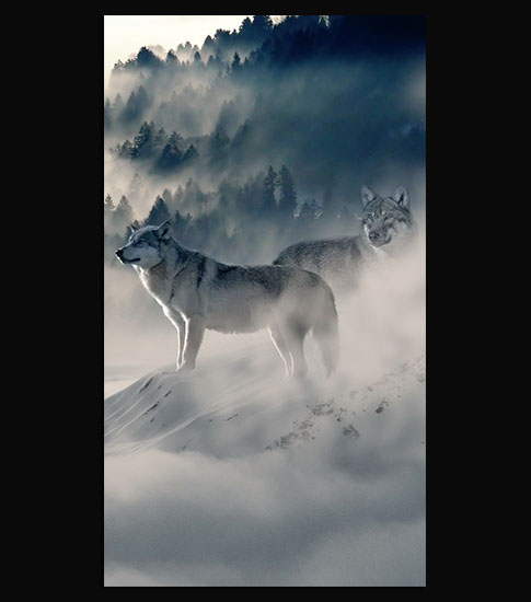 Wolf Iphone Wallpaper: Wolf Pack HD Wallpaper For Your Mobile Phone